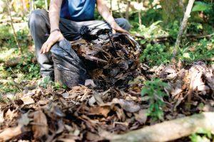 csh-environmental-garden-clearence